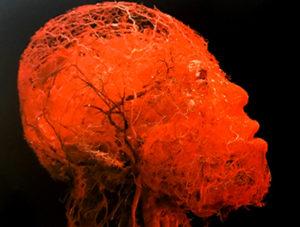 Illustration nº 2 : Configuration des artères de la tête et du cerveau