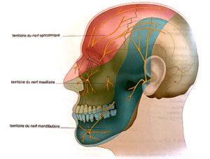 Illustration nº 18 : Territoires cutanés du nerf trigéminal (nerf crânien V).Manipulations des nerfs crâniens.